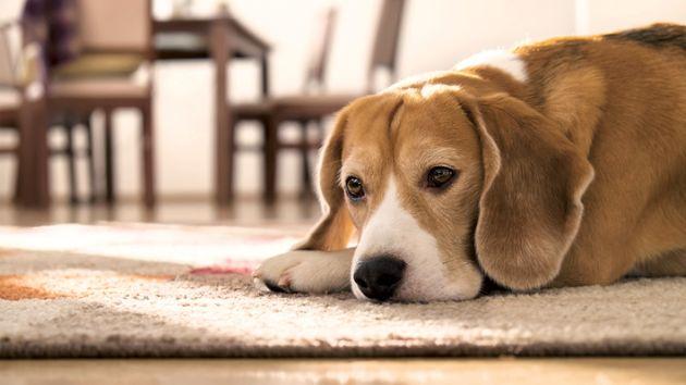 Mieterinnen Mieterverband Sind Hundebesuche Erlaubt