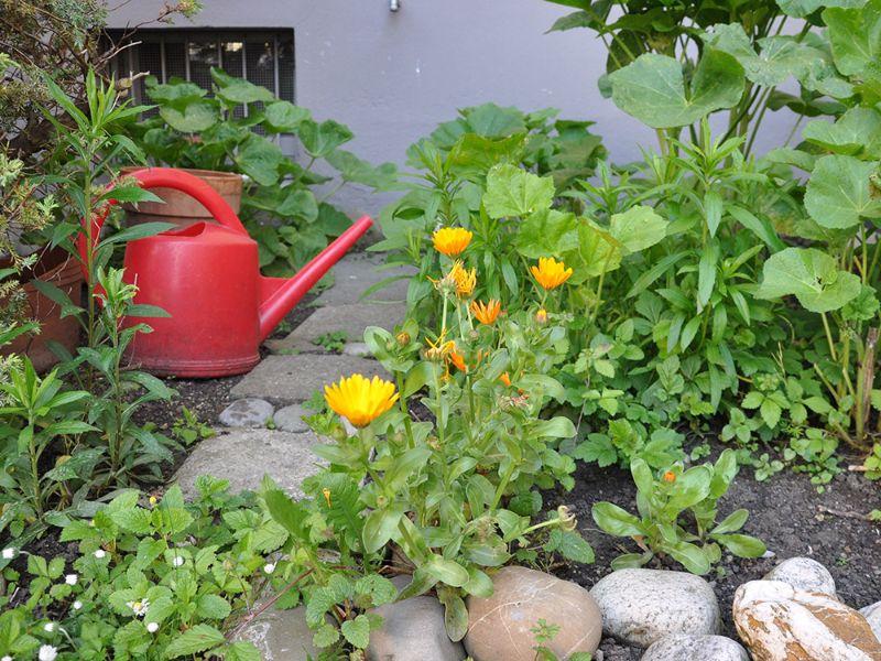 Mieterinnen Mieterverband Urban Gardening Darf Ich Meine